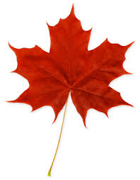 maple leaf red